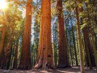 Conservation Challenges of Sequoia National Park