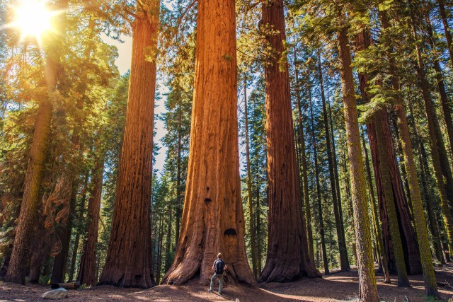 where to go in sequoia national park