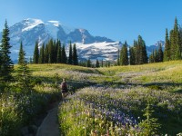 Preserving the Nature and Beauty of Mount Rainier